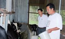 Làm giàu từ con bò sữa
