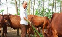 Lâm Đồng: Chăn nuôi bò thịt, bò sữa và thủy sản tiếp tục tăng