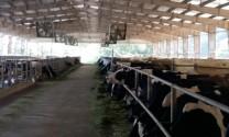 Giải pháp nâng cao chất lượng sữa, đảm bảm vệ sinh an toàn thực phẩm