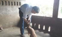 Phan Thiết (Bình Thuận): Không xảy ra dịch bệnh trên đàn heo