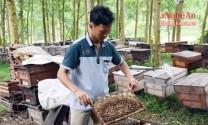 Nuôi ong Ý dưới rừng tràm thu 120 triệu đồng/tháng