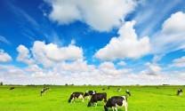 Công ty Vinamilk: Tiên phong đưa sữa tươi Organic ra thị trường