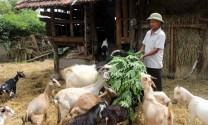 """Tiếp vốn nuôi dê giúp nông dân có """"của ăn của để"""""""
