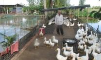 Học kinh nghiệm chăn nuôi