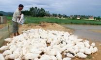 """Giải thưởng vàng chăn nuôi gia cầm Việt Nam:  """"Có công mài sắt có ngày nên kim"""""""