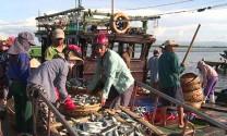 Xuất khẩu thủy sản miền Trung sụt giảm
