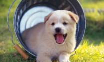 Hướng dẫn kinh nghiệm nuôi chó con