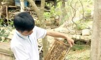 Mỗi thùng ong nuôi cho thu nhập 1 triệu đồng