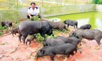 Điều kiện đầu tư kinh doanh một số lĩnh vực chăn nuôi