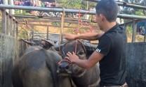 Bắc Hà -Lào Cai: Ưu tiên phòng, chống dịch bệnh