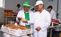 Lời chia sẻ chạm đến hàng ngàn trái tim người chăn nuôi Việt