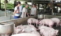 """Trấn Yên (Yên Bái): 100% cơ sở chăn nuôi hàng hóa cam kết nói """"không"""" với chất cấm trong chăn nuôi"""