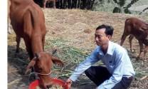 Quảng Nam: Ủ men vi sinh hoạt tính sản xuất thức ăn chăn nuôi