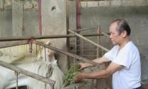 Thái Nguyên: Giàu lên từ ngựa bạch