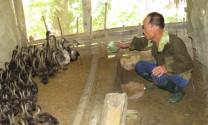 Tuyên Quang: Bảo vệ rừng kết hợp phát triển kinh tế nông thôn