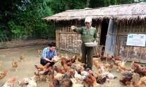 Nghệ An: Nuôi gà hoa lưu phượng ở Kỳ Sơn