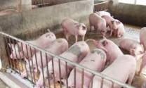 Ninh Bình: Điển hình chăn nuôi giỏi