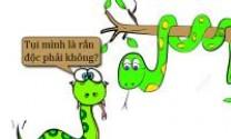Khi rắn độc sợ mình có độc