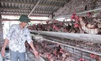 Thái Thụy - Thái Bình: Nông dân Thụy Hưng vượt khó làm giàu
