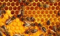 Bắc Giang: Thu nhập cao từ nuôi ong lấy mật