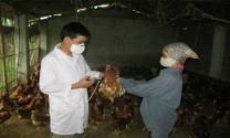 Vĩnh Phúc: Thu lãi 30 - 40 triệu đồng/tháng nhờ chăn nuôi
