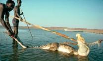 Bộ tộc ít người, như thời nguyên thủy, săn lùng hà mã và cá sấu để ăn thịt