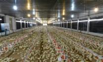 Đồng Nai: Hội thảo bảo vệ môi trường ngành chăn nuôi