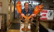 Sửng sốt tôm khổng lồ 145kg ăn cả thịt hải cẩu
