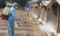 Long An: Chủ động phòng chống dịch bệnh cho vật nuôi