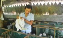 """Quảng Bình: Chàng thanh niên """"gác"""" bằng đại học về quê nuôi thỏ"""