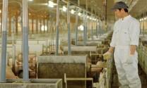 Thế giới và chăn nuôi bền vững