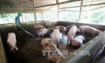 Bình Hà đầu tư 18.000 tỷ đồng phát triển trang trại chăn nuôi
