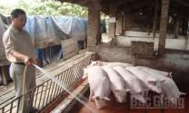 Phòng, chống dịch bệnh cho đàn vật nuôi khi thời tiết chuyển mùa