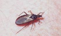 Các loài côn trùng nguy hiểm nhất thế giới (phần 1)