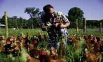 """Phúc lợi động vật - """"chìa khóa"""" chăn nuôi bền vững"""
