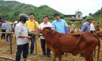Thái Nguyên: Trao bê giống cho các hộ nghèo