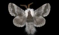 Kinh ngạc trước những kỷ lục của các loài vật (phần 2)