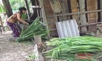 Nghệ An: Kinh nghiệm chống đói, rét cho gia súc