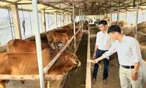 Ninh Bình: Đẩy mạnh phát triển chăn nuôi những tháng cuối năm