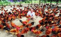Trang trại gà ta thả vườn lớn nhất Tây Ninh (phần 1)