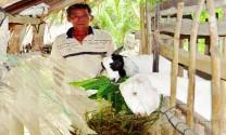 Hiệu quả Quỹ hỗ trợ nông dân