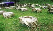 Hà Giang: Phát triển nghề nuôi ong khai thác mật hoa trong tự nhiên