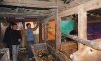 Hà Giang: Mèo Vạc, Quản Bạ chủ động phòng, chống rét và dịch bệnh cho gia súc, gia cầm