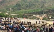 """Hà Giang: Phát triển chăn nuôi làm thay đổi """"cán cân"""" trong sản xuất nông nghiệp ở Xín Mần"""