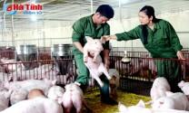 Hà Tĩnh: Bỏ Thủ đô về quê nuôi lợn, thu tiền tỷ mỗi năm