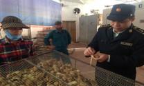 Vĩnh Phúc: Tăng cường công tác kiểm dịch động vật