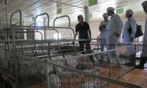Giải pháp nào cho chăn nuôi bền vững?