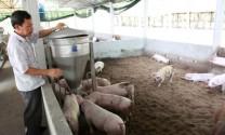 Ngành chăn nuôi 2016: Những vấn đề nổi bật