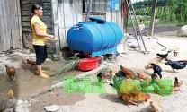 Đắk Nông: Nhiều địa phương phát triển mạnh nuôi gà thả vườn