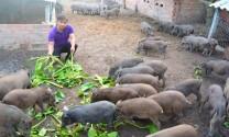 Mô hình chăn nuôi cho thu nhập cao